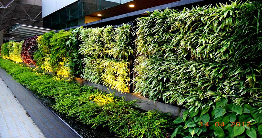 Top 5 Popular Plants to Grow in a Vertical Garden