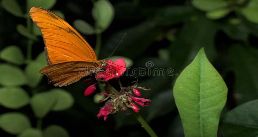 List of Butterfly Garden Around the World