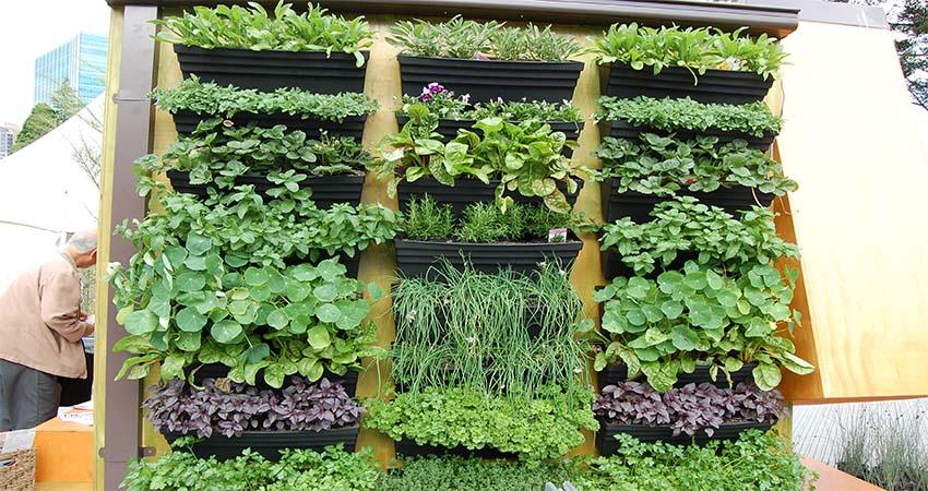 Top 5 Popular Plants to Grow in a Vertical Garden
