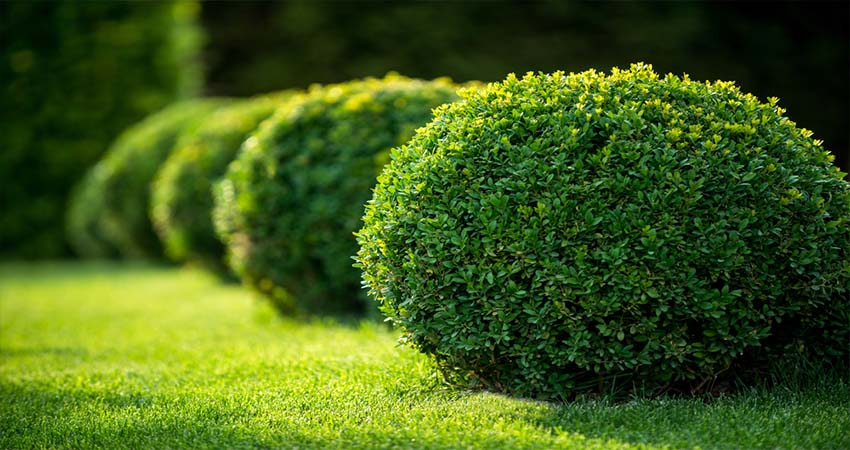 Which Hedge Do You Want to Plant? Here are the Lists
